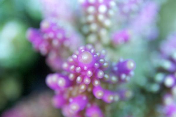 水に咲く花